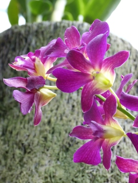 Botanischer Garten Bogor