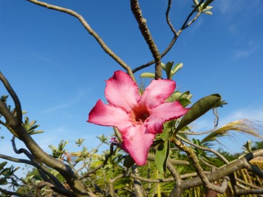 Duft und Blüte