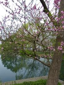 Hangzhou Xi Xi Wetlands