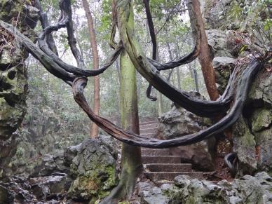 Wanderweg im Lingyin Park