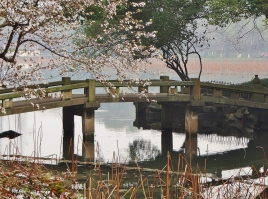 Brücken gibt es hier genug