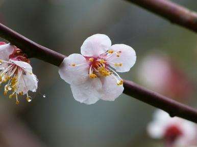 Die ersten Blüten kämpfen sich durch