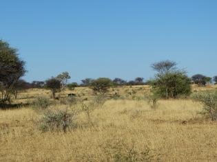 Okonjima Game Reserve