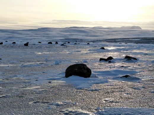Im Þingvellir Nationalpark