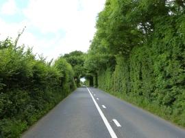 Straße mit Naturdach
