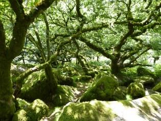 Wistmans Wood