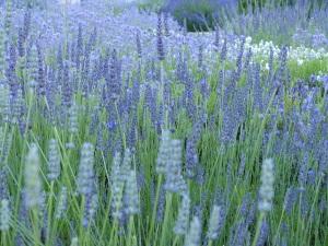 Buckfast Abbey Garden