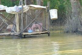 Leben auf dem Wasser