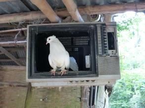 Vietnamisisches Fernsehen