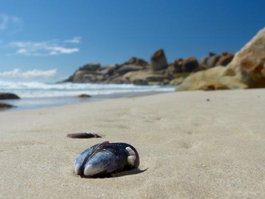 Llandundo Beach