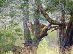 Plett Game Reserve