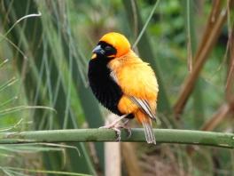 Birds of Eden