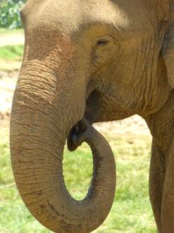 Elefantenwaisenhaus
