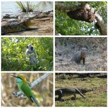 Artenvielfalt im Yala Nationalpark