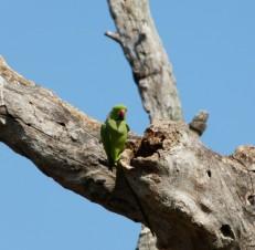 Bunte Vogelwelt