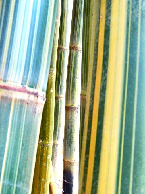 Bambusweg