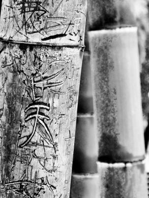 Himmel im Bambus