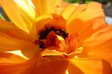Blumeninneres