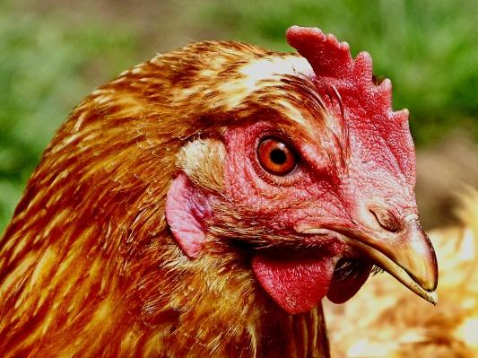Hühnerauge :-)