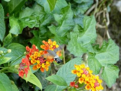 Schmetterling im Giardino Giusti