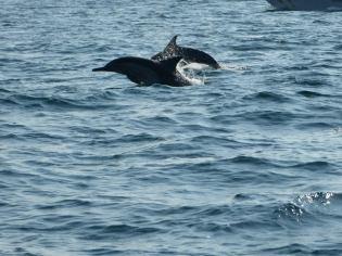 Delfine von unserer Bootstour