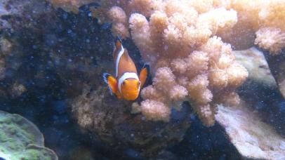 Wir haben Nemo gefunden