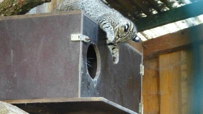 Kampfkatzen