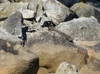 Wanderung durch den Abel Tasman Park