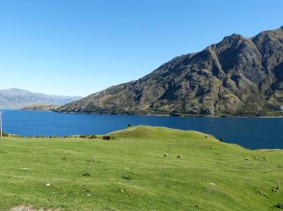 Lake Hawea Schafswiesen