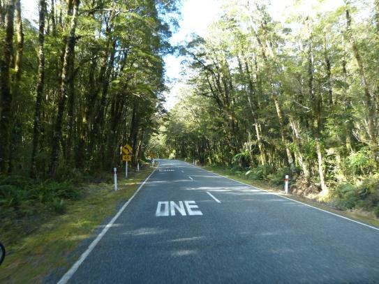 Regenwald und Moos