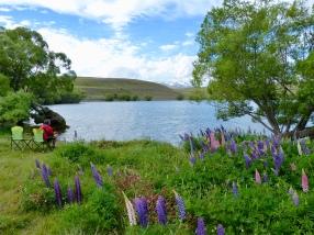 Lupinen am Lake McGregor Campsite