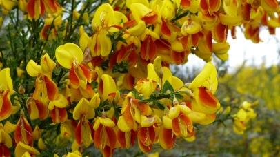Blütenpracht im Waimangu Valley