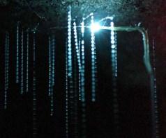 Spellbound Glowworm Caves