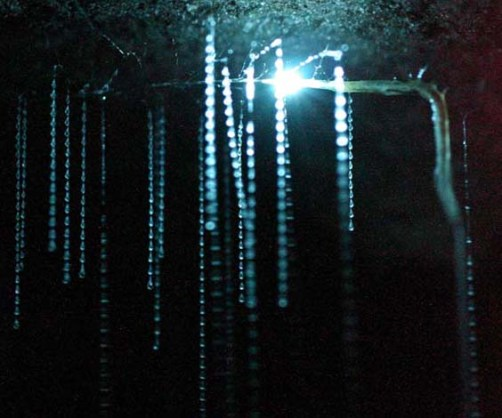 Spellbound Glowworm Caves