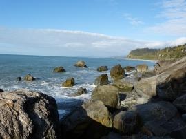 Auf der Suche nach Seelöwen