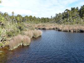 Sumpfgebiet am Lake Matheson