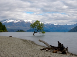 Lake Wanaka Lone Tree