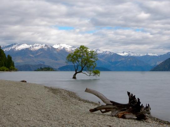 Lake Wanaka Lone Tree