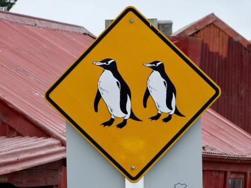 Die einzigen Pinguine auf unserer Reise