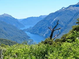 Blick in den Doubtful Sound