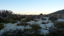 Alles noch mit Morgenfrost bedeckt