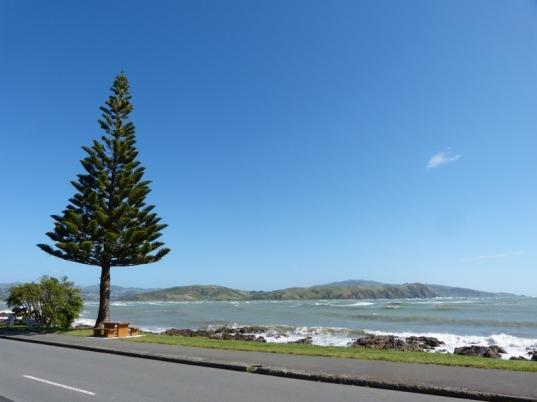 Rauhe, schöne Westküste auf der Nordinsel