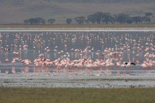 Flamingos zu Besuch