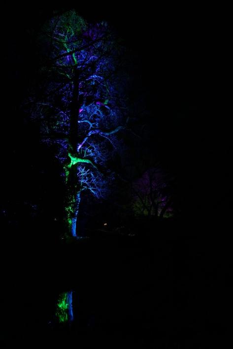 Baum mit Spiegelung