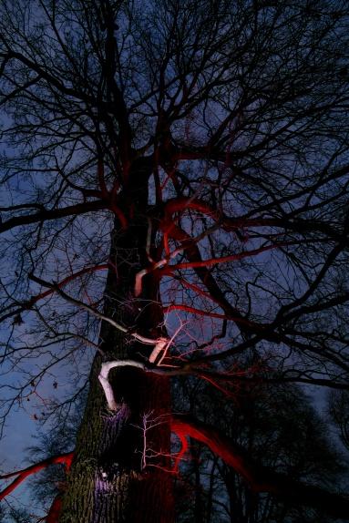 Toll beleuchtete Bäume