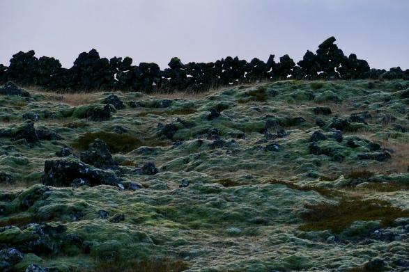Moosfelder