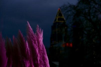Symbiose: Pink Pampasgras & Messeturm