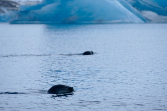 Eisberg in der Gletscherlagune