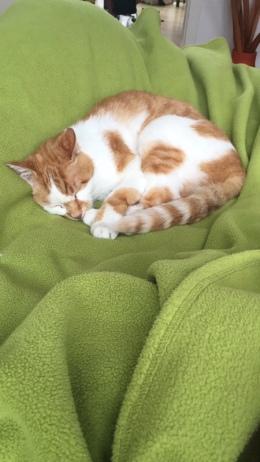 Mal wieder eine neue Decke beschlafen