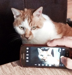 Katze mit Katze